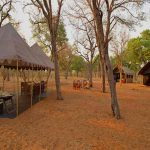 Several tents set up in a clearing of Chobe National Park