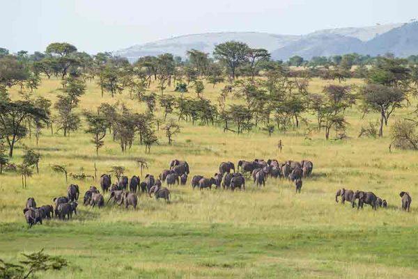 & Beyond Kleins Camp, &Beyond Kleins Camp, African Safari Experts, African Safari Experts
