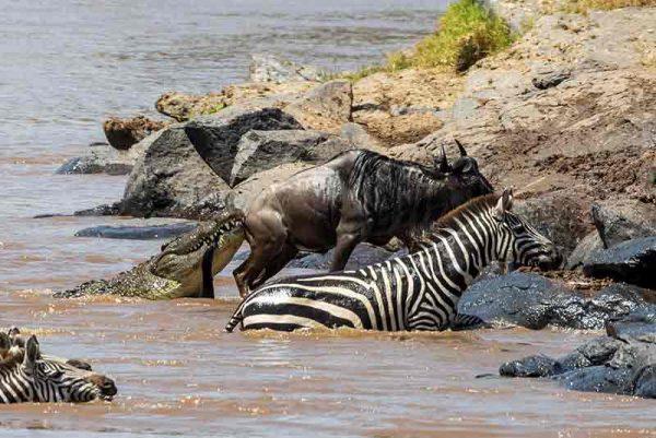 Angama Mara, Angama Mara, African Safari Experts