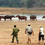 people walking with an armed ranger on a river bank with hippo in the distance
