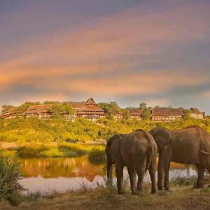 Several elephants standing at a waterhole drinking with a thatch lodge on a hillside in teh distance