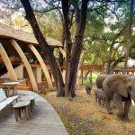 A herd of elephants walking past a lodge