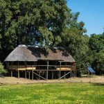 A thatch house in the bush looking out over a grass covered waterhole