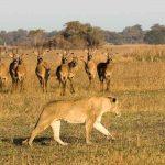Busanga Bush Camp, Busanga Bush Camp, African Safari Experts, African Safari Experts
