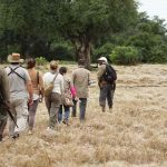 People walking through the African bush with a guide