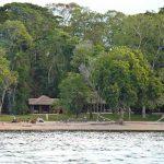 A Rubondo Island Camp chalet set in amongst trees