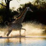 Duma Tau, Duma Tau, African Safari Experts, African Safari Experts