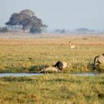 Kafue 4X4 expedition