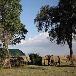 Three Elephants wandering past a safari tent