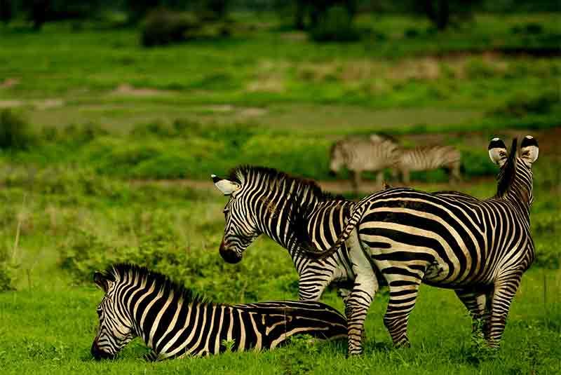 Kenya Big 5 Safari, Kenya Big 5 Safari – 8 Days, African Safari Experts, African Safari Experts
