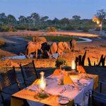 Several Elephants around a waterhole at dusk