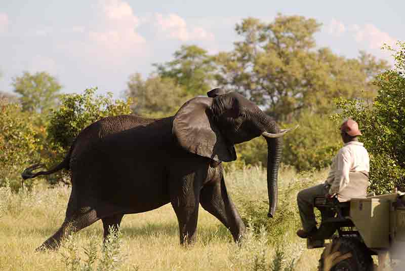 Kwando Kwara, Kwando Kwara, African Safari Experts, African Safari Experts