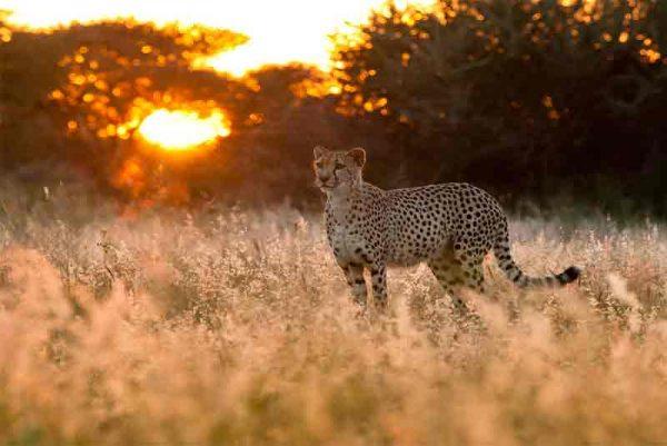 Guided Enchanting Namibia – 12 Days – Luxury