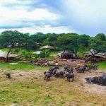 Luxury safari at Somalisa Acacia camp in Hwange national park