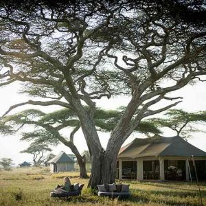 A tent under a tree in Eastern Serengeti