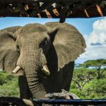 An Elephant close to an underground hide