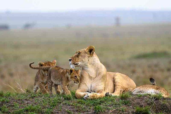 Governors Il Moran Camp, Governors Il Moran Camp, African Safari Experts, African Safari Experts