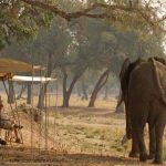 An Elephant walks past a group of campers