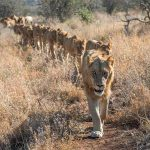 Singita Sweni, Singita Sweni, African Safari Experts