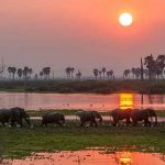 Elephants on the edge of a lake at sunset