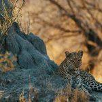 Sanctuary Chiefs Camp, Sanctuary Chiefs Camp, African Safari Experts, African Safari Experts