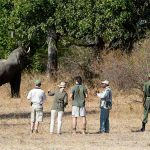 people standing in the bush with an armed ranger while an elephant feeds on a tree close by