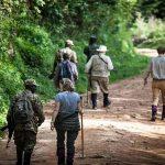 People walking on a forest road in Bwindi