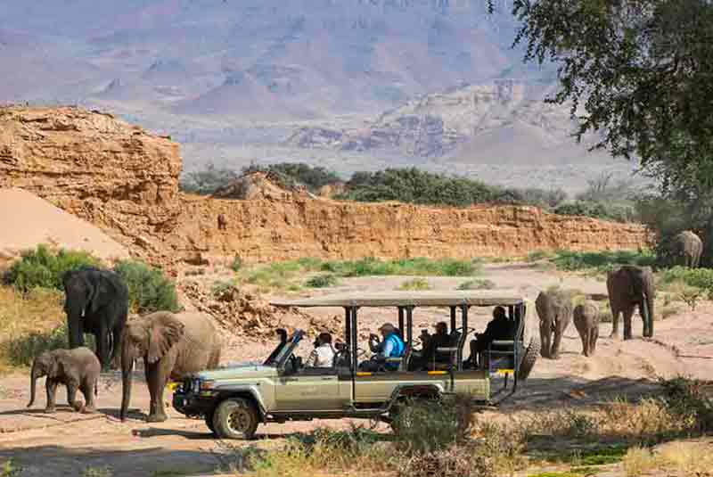 people on a vehicle observe a herd of Elephants in Damaraland