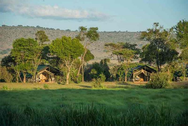 Safari tents under trees on the edge of a plain at Little Governers Camp