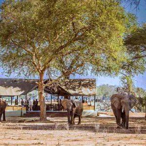 Elephants wander through Old Mondoro camp in Zambia