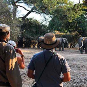 Stretch Ferreira Safaris
