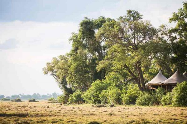 A tent under trees on the edge of a plain