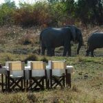 a table is laid out in the bush with elephants walking past