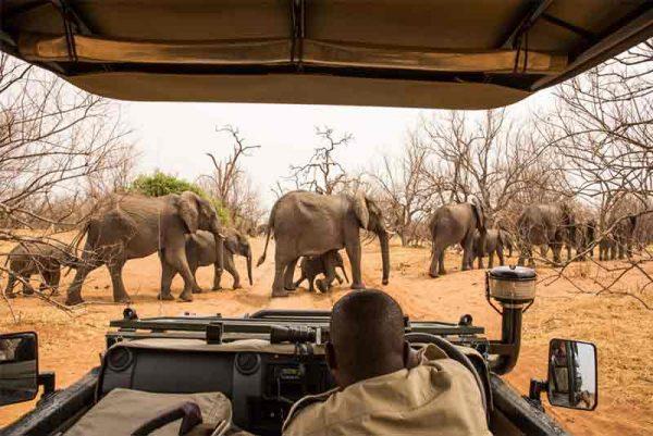 Lifetime Safari Expedition, Lifetime Safari Expedition – 10 Days, African Safari Experts, African Safari Experts