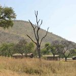 Bush and Crater, Best of Asilia Camps & Crater – 10 Days, African Safari Experts, African Safari Experts
