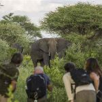 Guests on walking safari encounter an Elephant