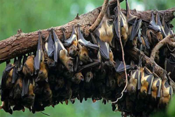 Kasanka Bat Migration- 10 Days