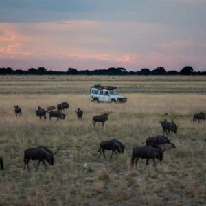 wildebeest, animals, liuwa plains, africa, landrover, grass, sunset, clouds