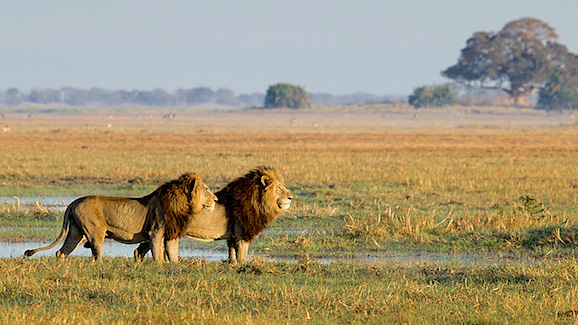 Walk Zambia