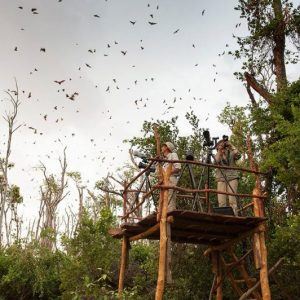 People standing on a platform observing flying bats