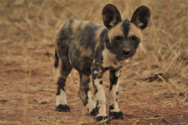 Khaudum and Linyanti, Khaudum and Linyanti – 10 Days, African Safari Experts, African Safari Experts