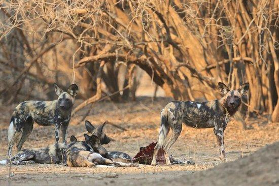 Zimbabwe Safari Packages