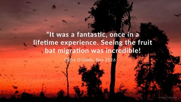 kasanka, Kasanka Bat Migration – 7 Days, African Safari Experts, African Safari Experts