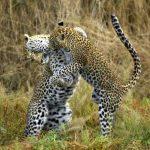 Classic Zambia, Classic Zambia – 10 Days, African Safari Experts