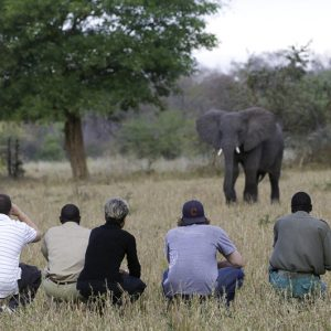 safari, walking, africa, bush, elephant