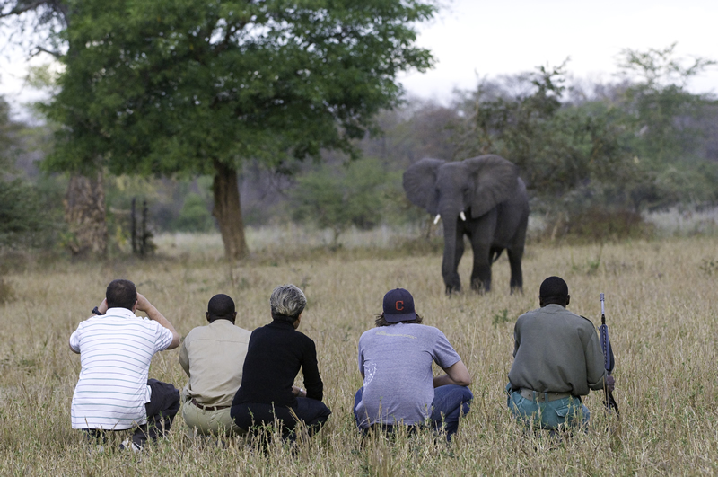 safari, walking, africa, bush, elephant