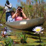 river, water, plants, africa, mekoro, okavango delta, africa
