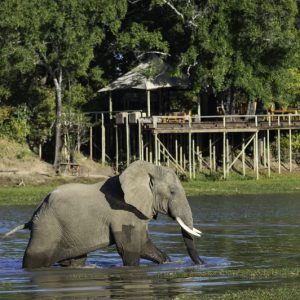 chindeni, elephant, water, lodge, bush, africa, zambia, south luangwa, african safari experts