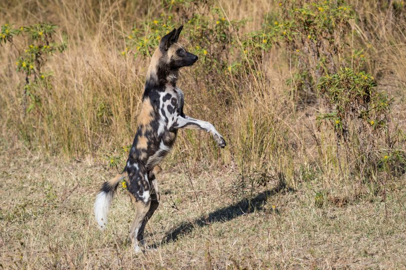 Classic Zambia, Classic Zambia – 10 Days, African Safari Experts, African Safari Experts