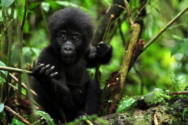 Primates & Predators, Primates & Predators – 12 Days, African Safari Experts, African Safari Experts